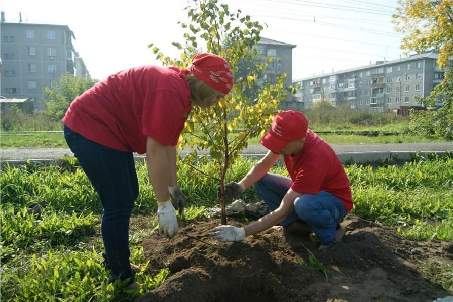 Продвинутые жители Челябинска смогут купить саженцы деревьев за экокоины