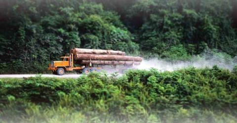 Минпромторг совместно с ВЭБ организовали конкурс блокчейн-проектов для лесной промышленности