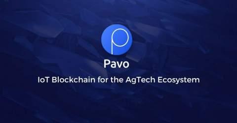 Новейшие разработки Pavocoin помогут производителям пальмового масла из Малайзии повысить урожайность и снизить нагрузку на окружающую среду