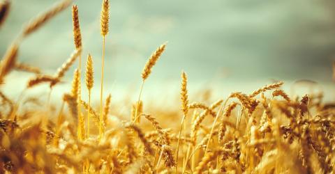 Президент Франции призвал европейских аграриев применять блокчейн для конкуренции с РФ