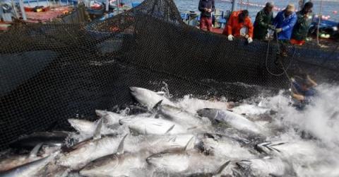 Всемирный фонд  дикой природы применяет блокчейн в борьбе с браконьерством