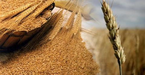 Поставка российской пшеницы в турецкий Самсун была оплачена биткоинами